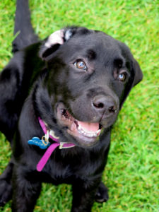 puppy walker cane guida ciechi